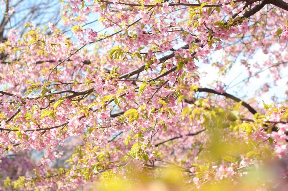 桜ロケ撮影開催。セラピーメイク&フォトセラピー  〜桜〜さくら〜SAKURA〜