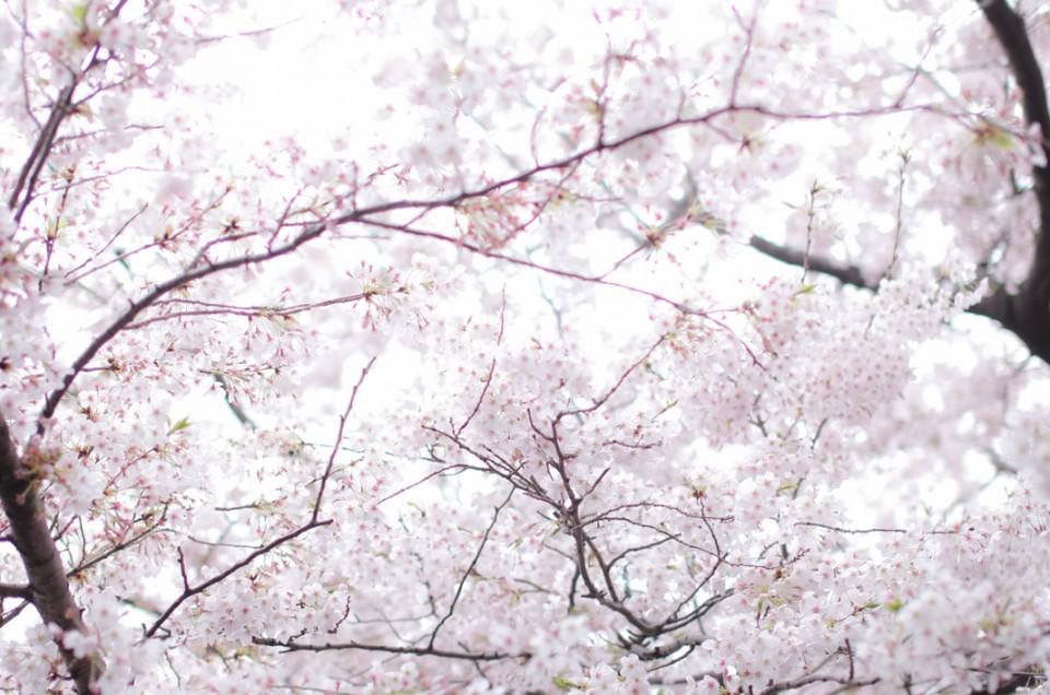東京の春と恋に落ちる。